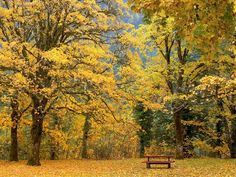 Beautiful Fall Pictures | Free Picture > Travel Beautiful autumn scenery