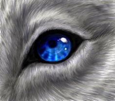 Blue Wolf Eye by WhiteK9 on deviantART
