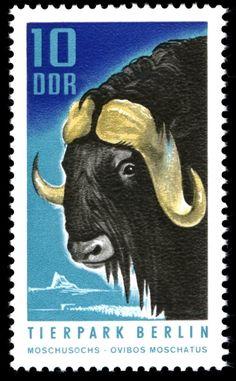 Stamp: Muskox (Ovibos moschatus) (Germany, Democratic Republic (DDR)) (Berlin Zoo) Mi:DD 1617,Sn:DD 1243,Yt:DD 1308,Sg:DD E1338