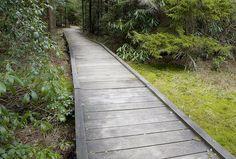 straight path Wooden Path, Paths, Sidewalk, Side Walkway, Walkway, Walkways, Pavement