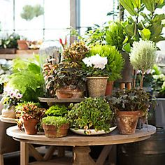 3 Ways to Re-Green Your Space