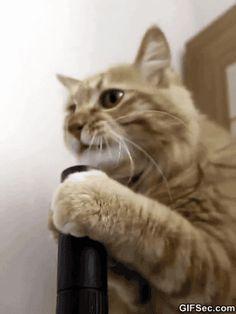 """Es muy común que cada vez que le cuento a la gente que tengo 2 gatitas como mascotas, respondan de una forma muy contundente con la frase: """"No me gustan los gatos"""".Bueno, tal vez eso sea porque nunca han tenido uno, puesun gato jamás se comporta igual con personas extrañas que con su papá o …"""
