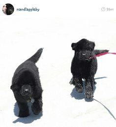 Nandi Appleby - a day at the beach