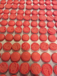 Hazelnut macaron shells in production.