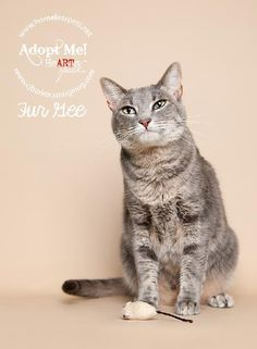 Fur Gee is a fergalicious kitty who likes to be held and snuggled. She was found while TNR'ing neighborhood cats and taken into foster care when she was about 10 weeks old. Fur Gee gets along well with dogs and cats. She is a bit shy when meeting...