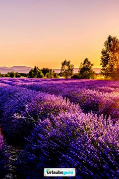 The brilliant colors over this lavender field during the sunset are simply captivating France Wallpaper, Fall Wallpaper, Nature Wallpaper, Wallpaper Backgrounds, Live Wallpapers, Iphone Wallpapers, Iphone Wallpaper Herbst, Places To Travel, Places To See
