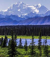 Denali Photographs - Mt McKinley from Cantwell  by Shaleen Holmes