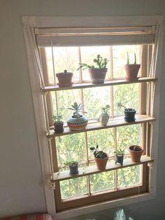 Command Ceiling Hooks Hanging Plants Indoor Window Plants Succulent Display
