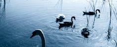 Tagesthemen-Moderatorin Caren Miosga berichtet, welcher mecklenburgische See es ihr angetan hat.