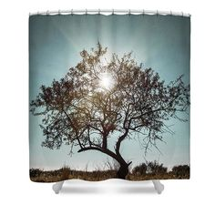 """Single Tree Shower Curtain by Carlos Caetano. This shower curtain is made from 100% polyester fabric and includes 12 holes at the top of the curtain for simple hanging. The total dimensions of the shower curtain are 71"""" wide x 74"""" tall."""