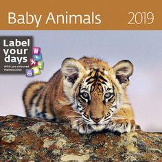 Nástěnný kalendář LP BABY ANIMALS 2019 Lp, Baby Animals, Baby Pets, Animal Babies, Cubs