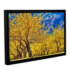 ArtWall 'Apple Trees 1' by Scott Campbell Framed Photographic Print on Wrapped Canvas Size: