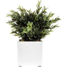Plastic Boxwood in White Ceramic Pot