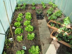In april konden mijn sla plantjes erin en mijn sperzieboontjes, aardbeien leven hier ook nog!