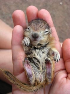 Baby squirrel. How tiny!