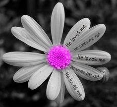 he loves me, he loves me not... flower petals