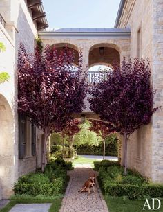 Gisele Bündchen and Tom Brady's Los Angeles Home  COBBLESTONE PATH The family's dog, Lua, sits on a path of reclaimed cobblestones, flanked by Japanese maples and shaded by a zinc-top loggia.