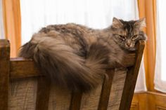 There are many methods to deter pet cats from sitting on the furniture or entering areas that they are not supposed to. This article lists some indoor cat repellents which are safe to use and very effective.