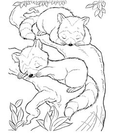 Raccoons in a tree coloring page | Raccoon Coloring page
