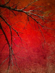 Red Morning - Tara Turner