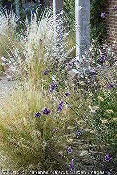 Grass - stipa, verbena and gaura whirling butterflies