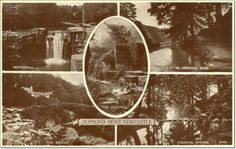 1950s Postcard Of Jesmond Dene, Newcastle, Tyne & Wear, England. #postcards