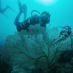 Belezas do fundo do mar! Existem mais de 400 espécies de corais e 1500 espécies de peixes na Grande Barreira de Corais. / There are more than 400 kinds of corals in the Great Barrier Reef. #scubadiving #greatbarrierreef #scuba #adventure #nature #expedicaooriente by familiaschurmann http://ift.tt/1UokkV2