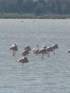 Flamingos Tigaki Salt Pan. Kos. Amazing find...