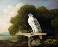 George Stubbs-  Greenland Falcon