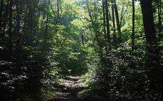 Robertsville State Park   Missouri State Parks
