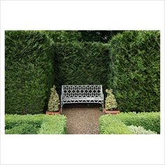 Garden & Plant Picture Library - Specialising in horticultural photography Garden Spaces, Garden Plants, Outdoor Spaces, Outdoor Decor, Plant Pictures, Garden Quotes, Topiary, Porch Swing, Hedges