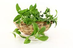 Replace sugar by stevia: day 2 Korn, Stevia, Herbs, Plants, Gardening, Sugar, Lawn And Garden, Herb, Plant
