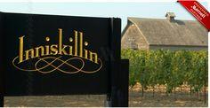 Inniskillin Winery - Producing fine wine for the world from the Niagara Region near Niagara Falls