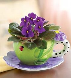 African Violets ~ Beautiful and fun to propagate.  Just clip a leaf, dip in rooting hormone and place in a pot with African Violet mix potting soil.You can also root them in water & plant stem shallow after roots are established.