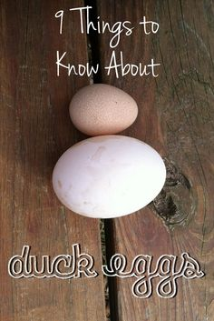 9 things to know about duck eggs