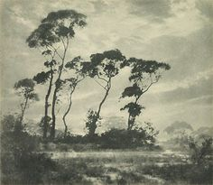 An image of Winter's light by Harold Cazneaux