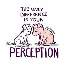 only difference is your perception