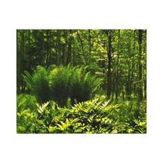 Wild Fern Abstract Canvas Print ~ Step back into a prehistoric paradise! This fine art wrapped canvas print invites you into a woodland setting of sunlight and shadow. Wild green and yellow ferns carpet the forest floor in an abstract pattern.