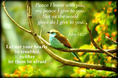 Peace I leave with you; my peace I give you. Do not let your hearts be troubled and do not be afraid. Bible Quotes About Peace, Earth Song, God Will Provide, Names Of Jesus, Bible Scriptures, Peace Of Mind, Daily Inspiration, Verses, Prayers