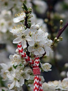 Bulgarian tradition called Baba Marta (Grandma Marta) on of March people start to wear the Martenichka and on of April when in Bulgaria is spring you hang it on a beautiful tree or flower. South East Europe, Eastern Europe, Baba Marta, Crafts For Seniors, Welcome Spring, Thinking Day, Bulgarian, Macedonia, Spring Flowers