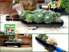 Wine Bottle Garden Kit with Live succulents Wine Bottle Garden, Wine Bottle Planter, Wine Bottle Centerpieces, Old Wine Bottles, Recycled Glass Bottles, Bottles And Jars, Plastic Bottles, Bottle Art, Bottle Crafts