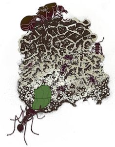 Bioenergy potential unearthed in leaf-cutter ant communities -- ScienceDaily