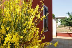 #Puglia #flowers #holiday