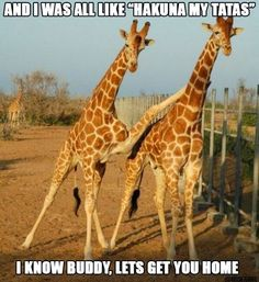 Funny pictures of animals posted every day. We're bringing you the best images of funny pets, weird and cute animals. Cute Baby Animals, Funny Animals, Humor Grafico, Best Friends Forever, True Friends, Friendship Quotes, Friendship Pictures, Make Me Smile, Laughter