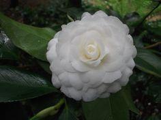 Bloom, Rose, Spring, Garden, Plants, Study, Tips, Landscaping, Flowers