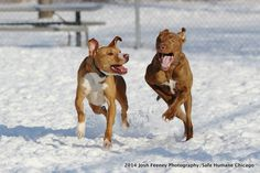 Advocacy, Confidence-Building, and Second Chances at Safe Humane Chicago