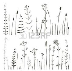 wild grass: Sketchy Wild Field Flowers and Grass on White Monochrome Collection…