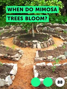 Learn How to Fertilize Thuja Green Giant Hydroponic Growing, Hydroponic Gardening, Organic Gardening, Gardening Tips, Aquaponics, Kitchen Gardening, Texas Gardening, Gardening Services, Vegetable Gardening