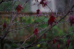 clinging droplets