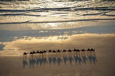 Camelride on Cable Beach, Western Australia